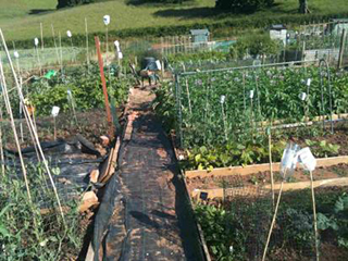 Allotment Half Plot